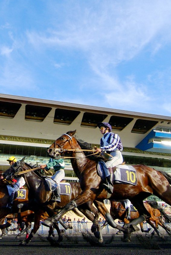 Hippodrome de Paris ideal gourmet – Hippodrome Paris-Vincennes Derby Menu